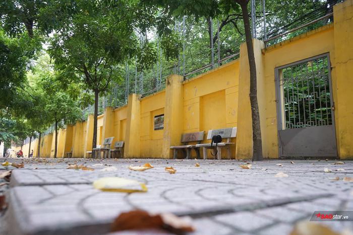 Góc tường bao đầy lá vàng…