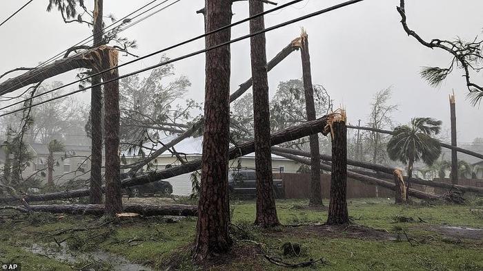 Cây đổ hàng loạt ởPort St. Joe. Nhiều sân bay ở Florida buộc phải đóng cửa cùng hơn 453 chuyến bay đã bị hủy do bão Michael. Ảnh: AP