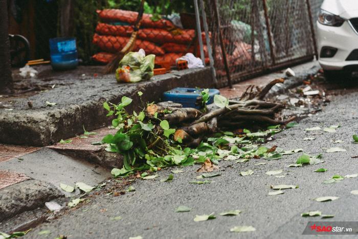 Mưa to, gió giật mạnh khiến nhiều cành cây bị quật gãy, rơi xuống đường.