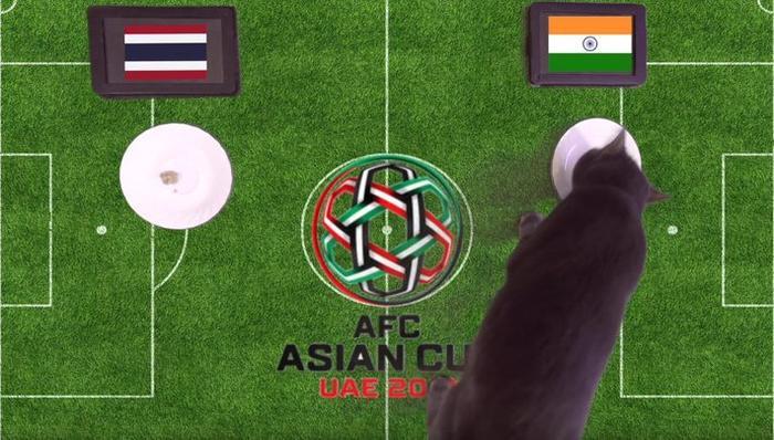 Mèo Cass dự đoán đúng Thái Lan thua Ấn Độ.