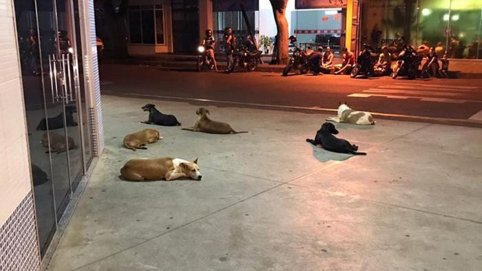 6 chú chó túc trực ngoài cửa bệnh viện đợi chủ nhân suốt 24 tiếng.