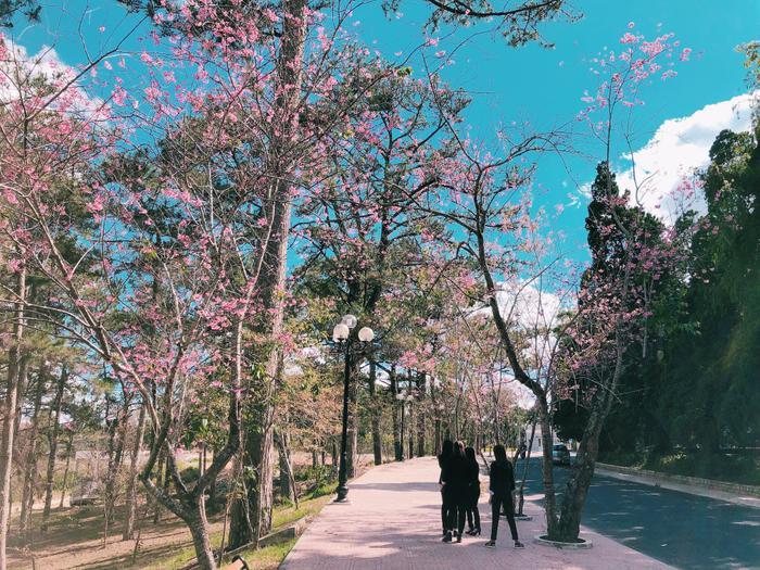 Hình ảnh quen thuộc trong khuôn viên Đại học Đà Lạt là những tán thông xanh cao vút, những con dốc thoai thoải, đường đi quanh co uốn lượn, bậc thang rêu phong…