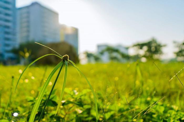 Quàn bàn tay của nhiếp ảnh Nguyễn Xuân Hạnh, cỏ cây trong khuôn viên KTX bỗng trở nên xinh đẹp lạ kỳ.