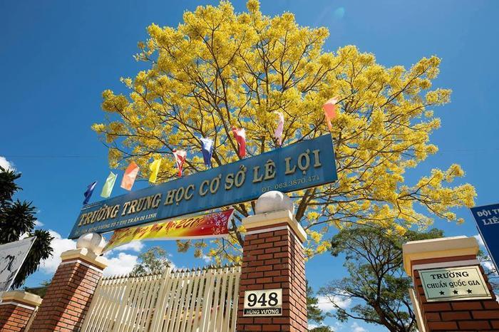 Cây hoa phượng trong trường THCS Lê Lợi. Ảnh: Nguyễn Ngọc Kiều Trinh