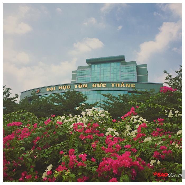 Giàn hoa giấy với những màu sắc rực rỡ nở rộ trong khuôn viên trường Đại học Tôn Đức Thắng.