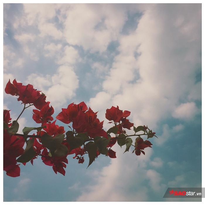 Trời xanh mây trắng hoa hồng, mọi thứ thật nghệ thuật phải không nào?
