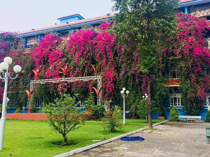 Dãy tường của trường Đại học Thủ Dầu Một rợp hoa giấy rực rỡ gây sốt MXH. Ảnh: Bình Dương 24H