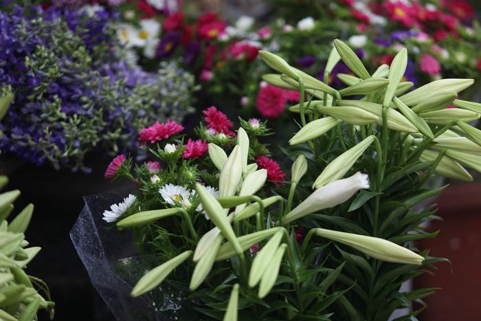 Hà Nội tháng 3 ẩm ương thất thường như cô gái mới lớn nhưng cũng là thời điểm đẹp nao lòng với đủ sắc hoa.