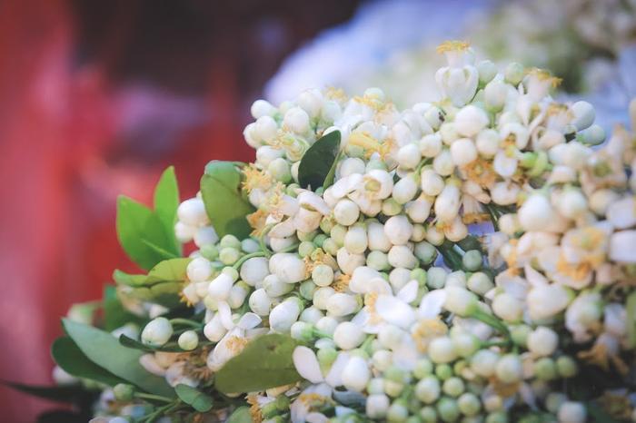 Những chùm hoa bưởi nồng nàn trắng muốt