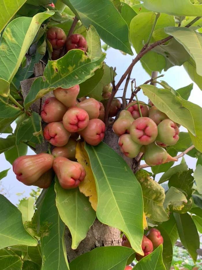 """Phương Lê khoe thành quả """"cây nhà lá vườn '"""" gặt hái được sao nhiều ngày chăm bón."""