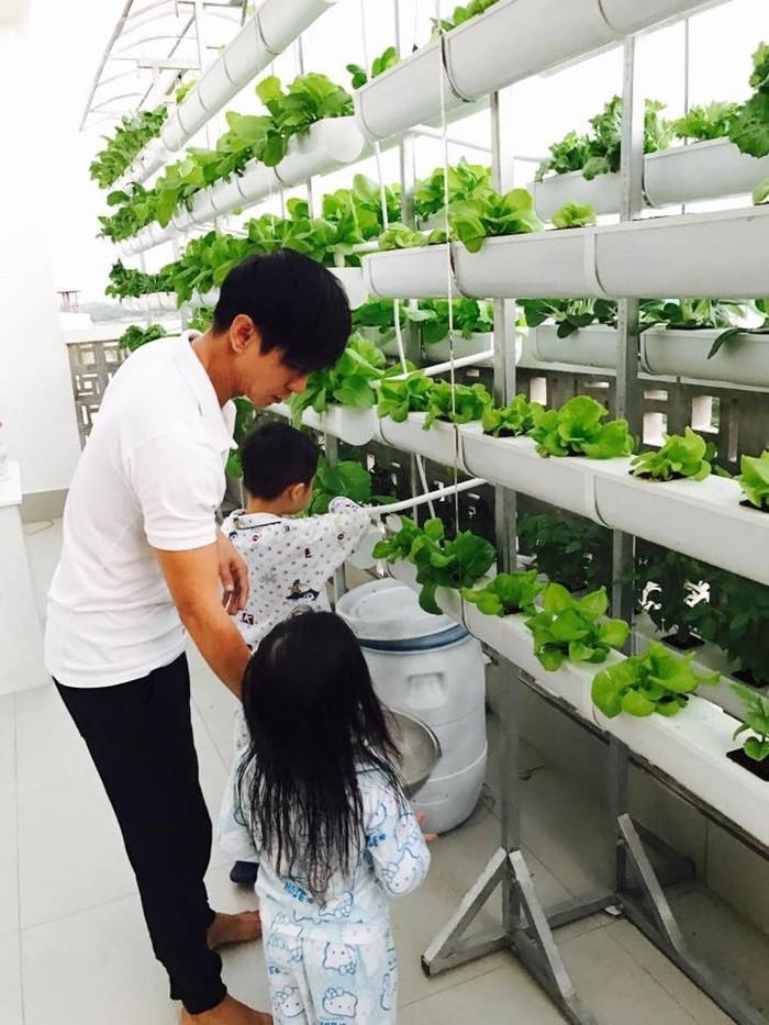 Vườn rau sạch của nhà Lý Hải trồng rất nhiều loại rau, quả.