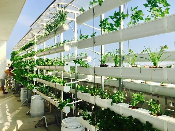 Vườn rau trên sân thượng được vợ chồng Lý Hải - Minh Hà đầu tư thiết kế theo dạng thổ canh và thủy canh.