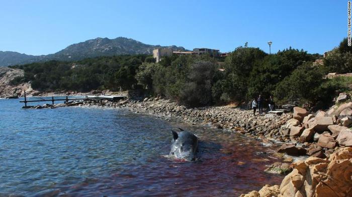 Phát hiện gây sốc trong bụng xác cá voi mang thai dài 8 m trôi dạt vào bờ biển ảnh 2