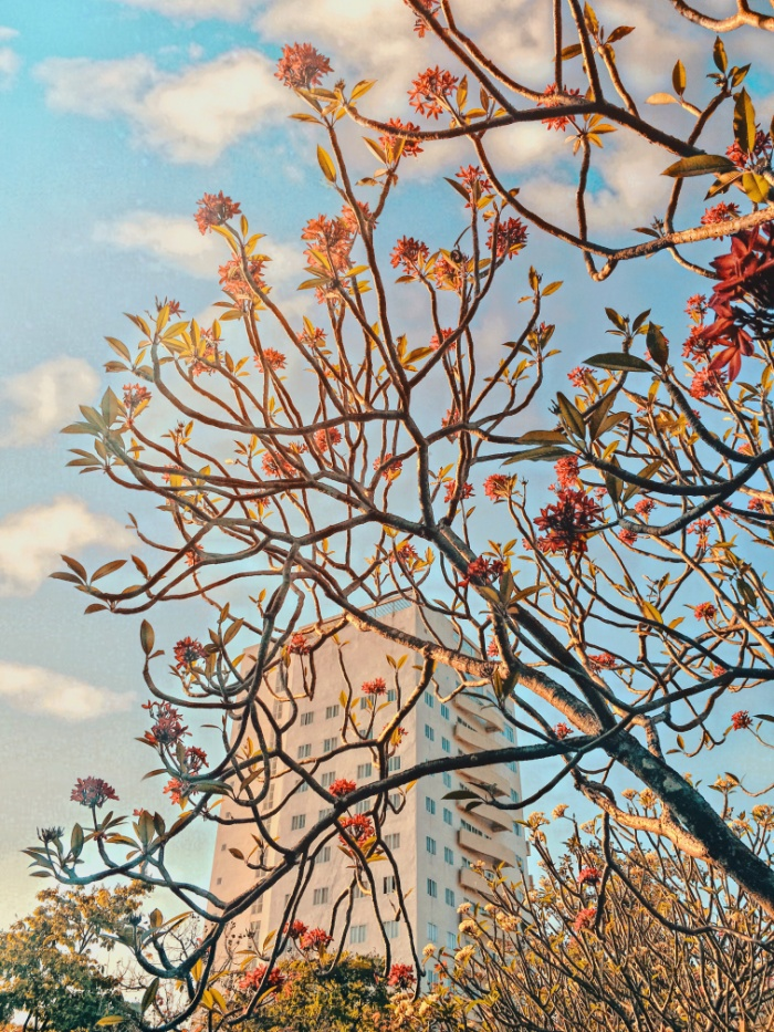 Dường như góc ảnh nào của Đại học Quy Nhơn cũng xinh xắn vô cùng. Ảnh do bạn Lê Nguyễn Xuân Uyên thực hiện