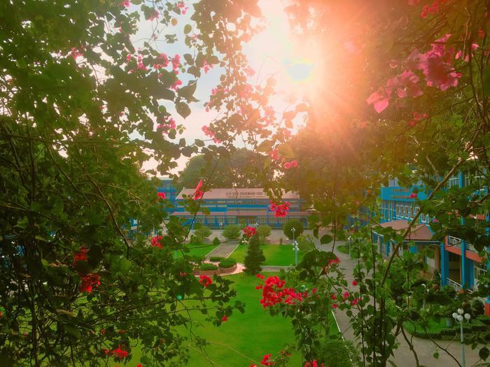 Đại học Thủ Dầu Một khoe sắc rực rỡ trong mùa hoa giấy. Ảnh do bạn Trịnh Quốc Nhật Giang thực hiện