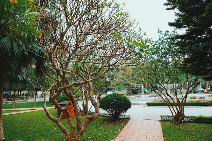 Khuôn viên xanh mát tại ngôi trường này.