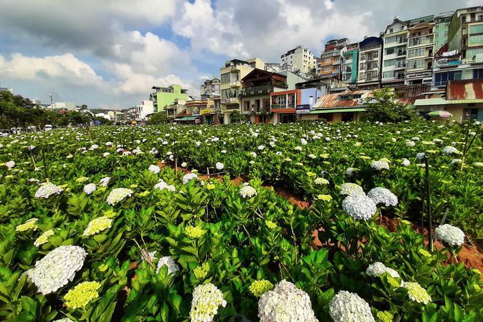 Phải dò bản đồ tích cực thì bạn mới dễ dàng tìm tới những vườn hoa tuyệt đẹp như thế này trên Đà Lạt được
