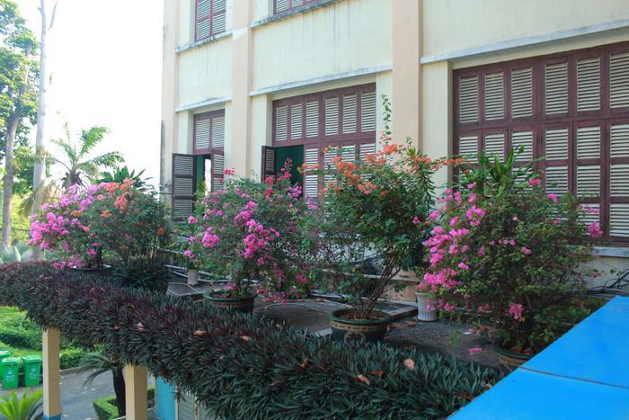Mỗi mùa mỗi thức hoa khác nhau, ngôi trường đẹp như một vườn thượng uyển trong truyền thuyết vậy.