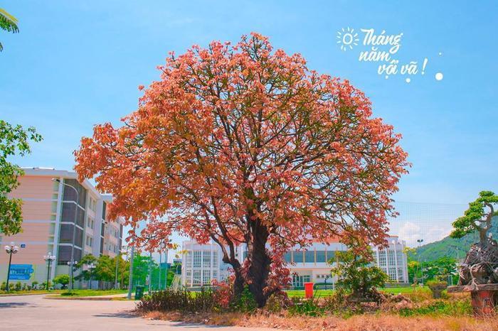 Bước vào thăm Đại học Quy Nhơn, bạn sẽ cảm nhận ngay được vẻ đẹp trong lành, xanh mát bởi khuôn viên trường rất nhiều cây với tán rộng.