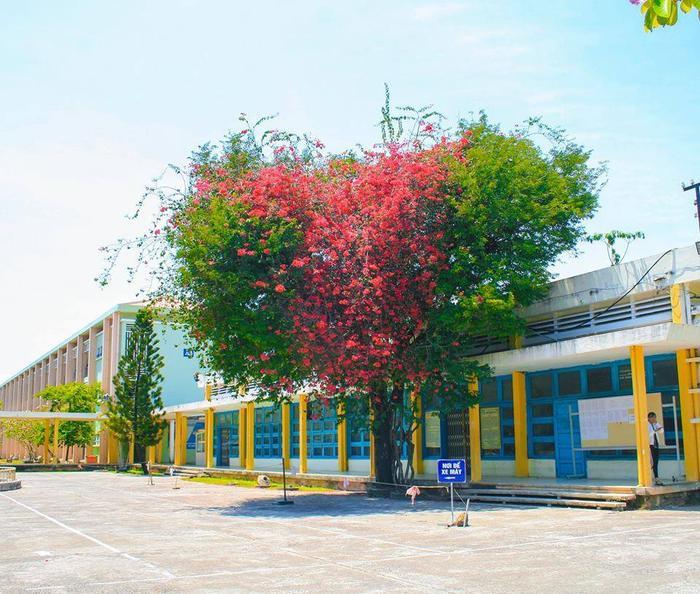 Cận cảnh cây hoa giấy hình trái tim ở Đại học Quy Nhơn.