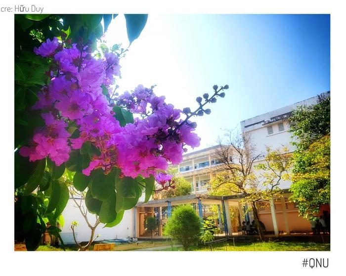 Sân trường lung linh nhiều sắc hoa.