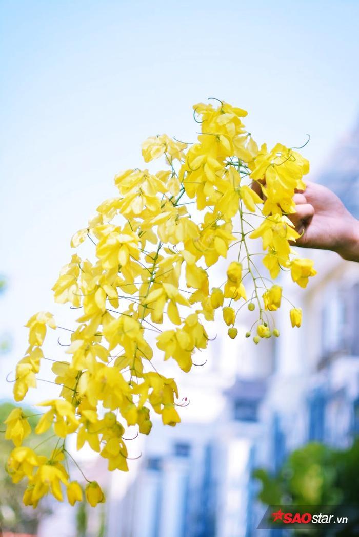 Nhưng đẹp nhất thì phải kể đến là bò cạp vàng mọc dọc Điện Biên Phủ, kênh Hoàng Sa - Trường Sa, Tôn Đức Thắng…