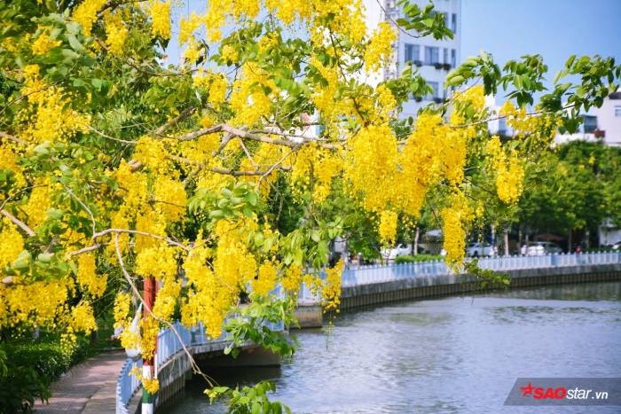 Mùa hoa đẹp nao lòng ở khắp thành phố.
