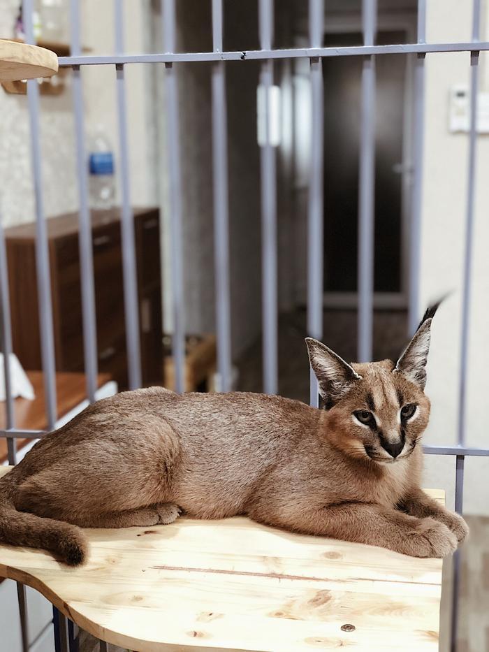 Quy tắc đầu tiên của chủ nuôi là dù nuôi động vật nhà hay động vật hoang dã đều phải chích ngừa.