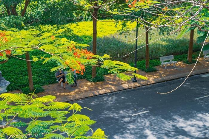 Dưới những tán cây xanh mát, quả là không gian lý tưởng để các nhóm bạn cũng trò chuyện, tâm sự.