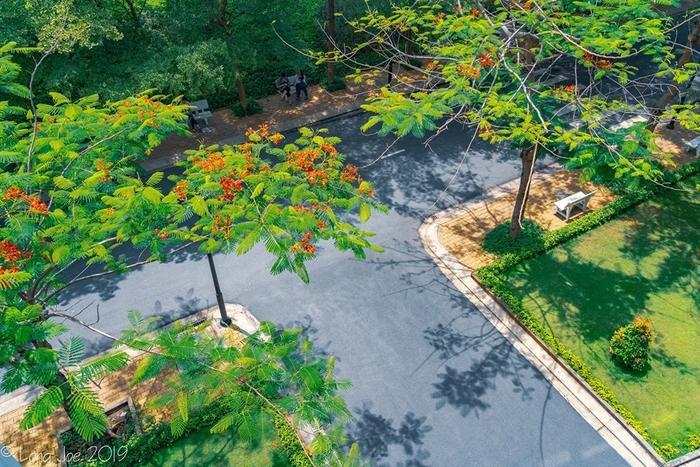 Nắng vàng, cây xanh xen lẫn sắc đỏ hoa phượng, khung cảnh thơ mộng hơn bao giờ hết.
