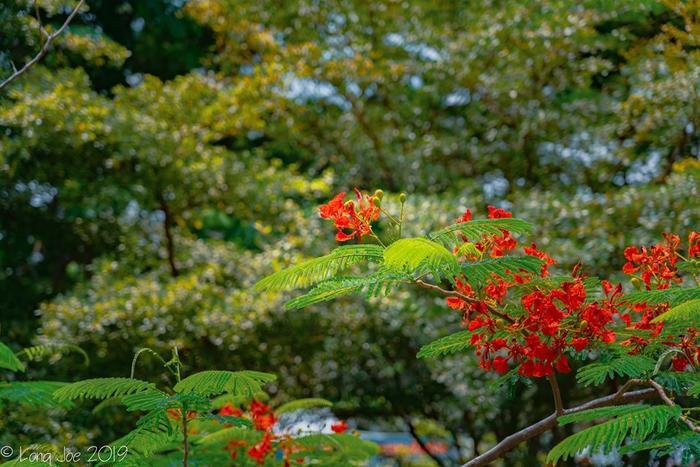 Những ngày cuối tháng 5, phượng nở đỏ rực, ve kêu râm ran, báo hiệu mùa hè đã về.