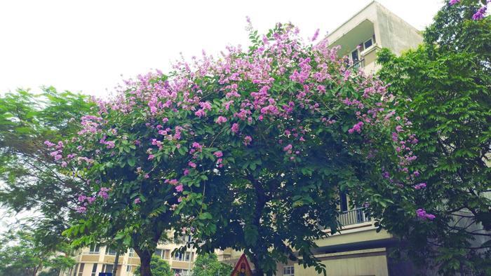 Hoa nhớ thương ai hoa rơi xuống đất?