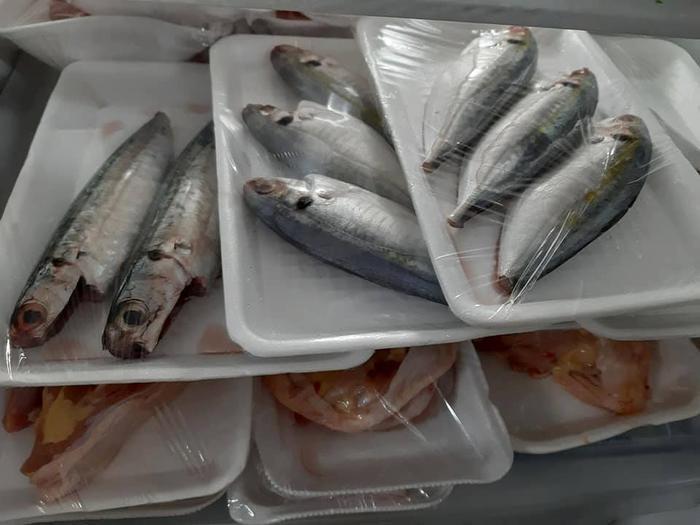 Các loại cá tươi ngon được bảo quản trong tủ lạnh.