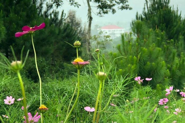 Cây cối, hoa cỏ đua nhau khoe sắc, tạo nên sắc màu cực bắt mắt.