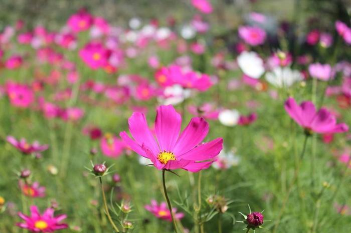 Các loài hoa quanh năm khoe sắc.