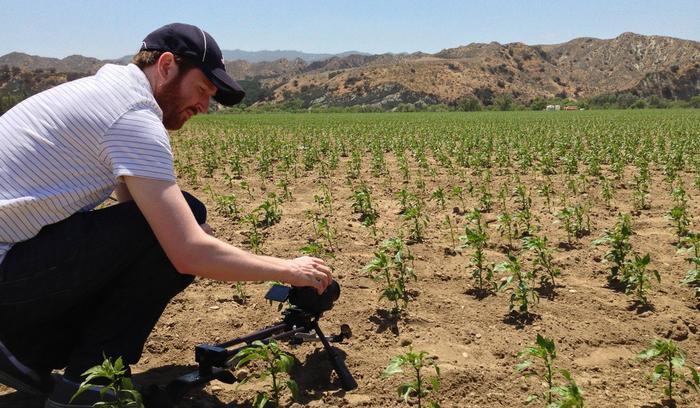 Nhà làm phim Griffin Hammond tham quan cánh đồng trồng ớt jalapeño ở hạt Ventura, bang California. Số ớt này được sử dụng để làm nên tương ớt của Huy Fong. Ảnh: Griffin Hammond.