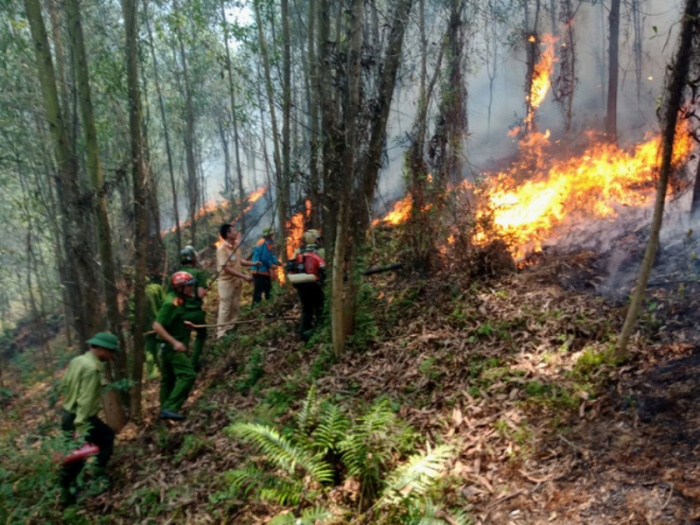 Cháy rừng thông, keo bùng phát trên núi Nầm