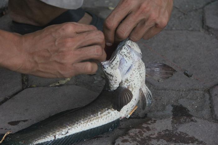 Con cá có trọng lượng nặng gần 1kg ông Tuấn Anh câu được.