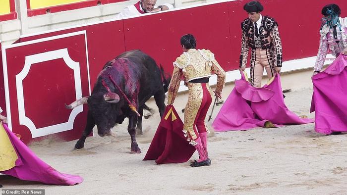 Cái chết đau đớn và từ từ là số phận của những chú bò tót ở lễ hội San Fermin.