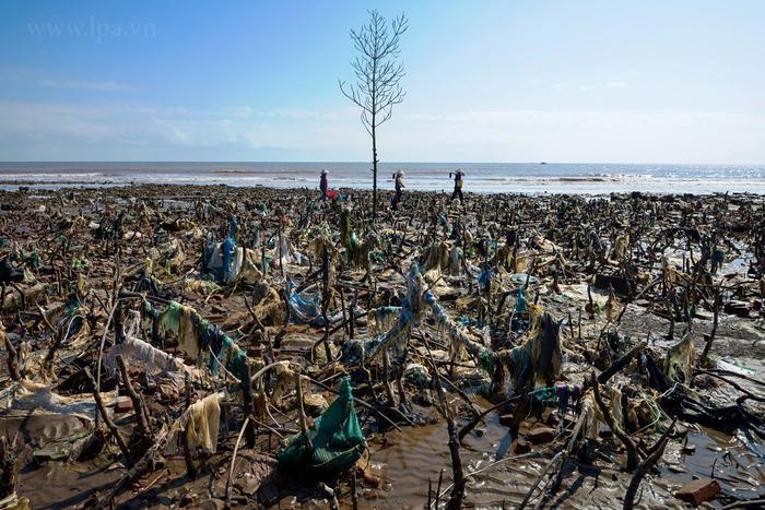 Một khu rừng cây cạnh biển đã chết, cũng chính là nơi rác thải nhựa mới lộ diện. Khi chúng bị sóng đánh vào bờ đã mắc vào cây không trôi ngược ra biển được nữa. Ảnh chụp tại Nam Định vào 12/2018.