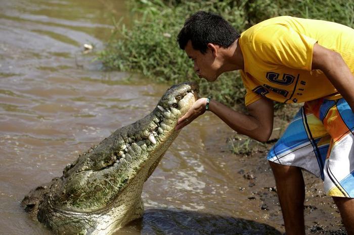 Anh Juan Cerdas đang hôn cá sấu.