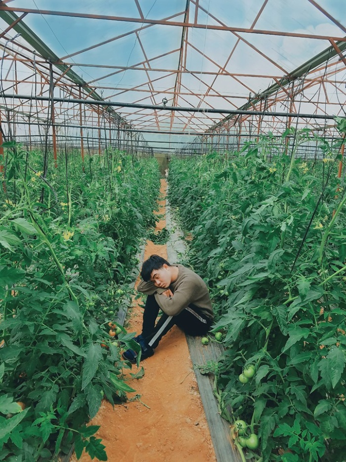 """""""Vườn cà chua này tui đi bộ ngang qua vén màng vô xin chị đó chắc chủ vườn hay sao á chị gật đầu cái tui nhào vô chụp luôn. Cà chua gì to như trái hồng á, lạ lùng lắm mọi người ơi.'"""