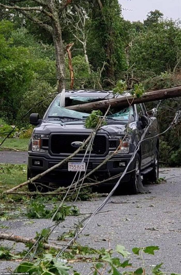 Một thân cây bị đổ xuyên qua kính chắn gió ô tô.