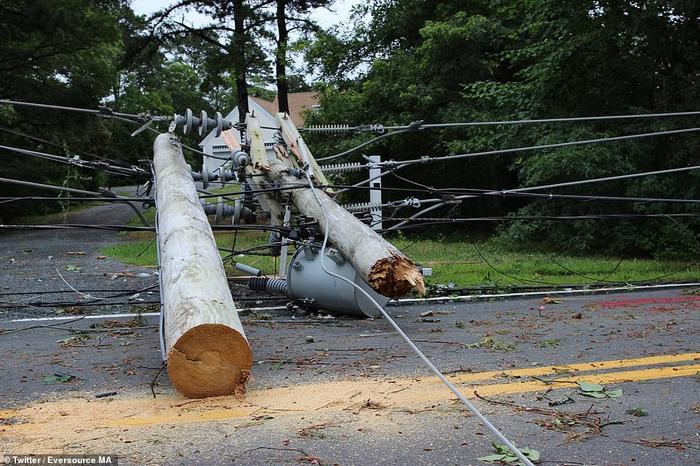 Cây và đường dây điện đổ ngổn ngang trên đường.