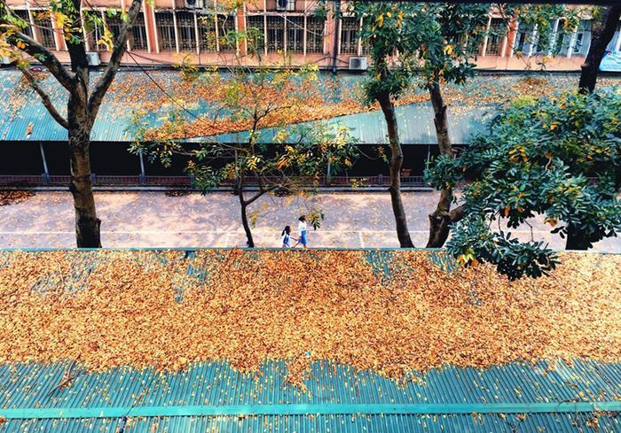 Lá vàng rơi nhiều nhuộm luôn màu mái nhà xe E1 của VNU.