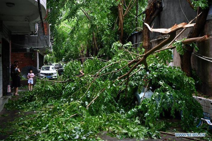 Cây bị gió bão Wipha quật ngã trên đường phố ở Hải Khẩu, phía nam tỉnh Hải Nam.