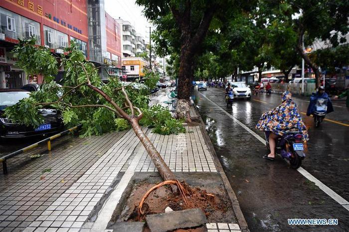 Cây cối bị bật gốc khi bão Wipha đi qua ở tỉnh Hà Nam.