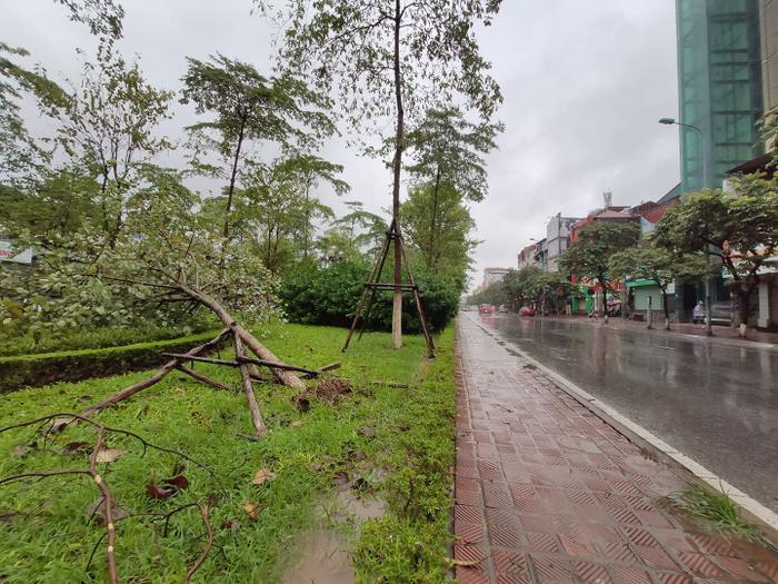 Cây bật gốc trên đường Văn Cao.