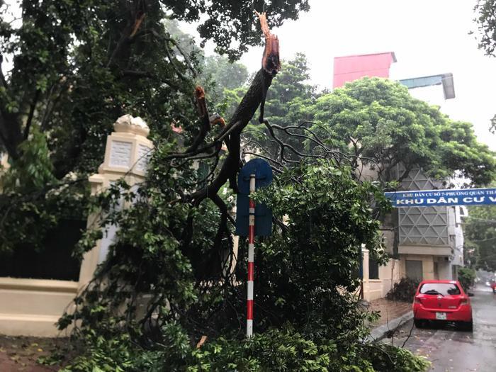 Cành cây gãy trên đường Phan Đình Phùng.
