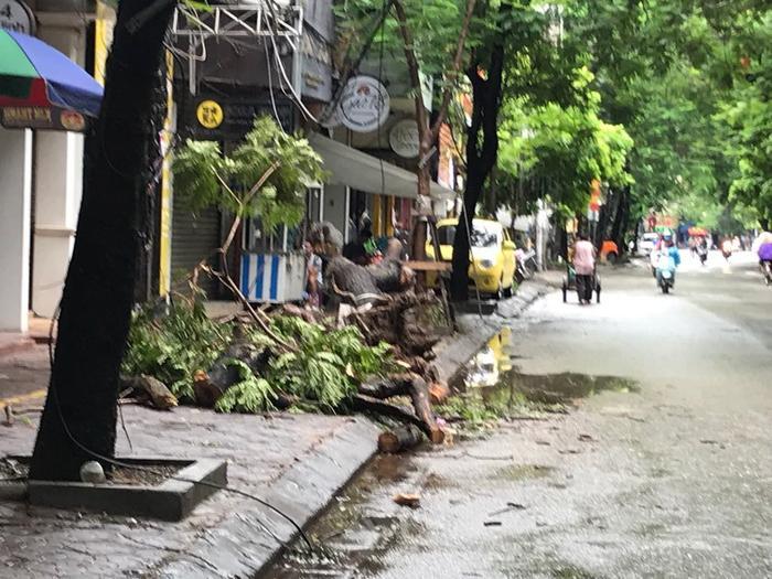 Cây đổ trên đường Mê Linh được công nhân cắt tỉa cành kéo sát vào vỉa hè để các phương tiện đi lại.